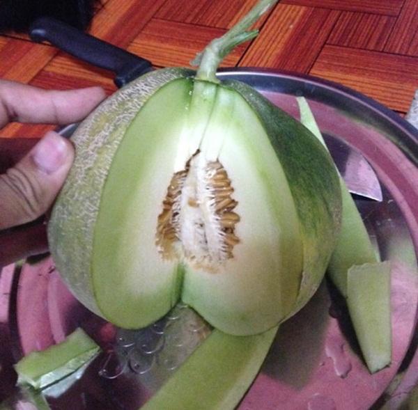 growing-melon-in-apartmentt (3)