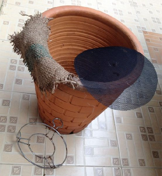 how to grow bean sprouts in clay pot (4)