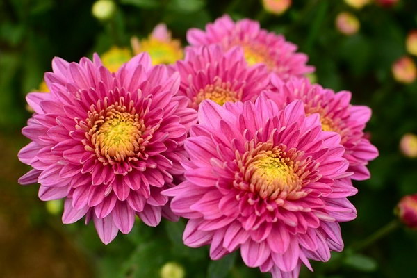 meaning of flowers for worshiping (10)