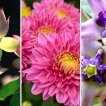 """เรื่องน่ารู้ : ความหมายของ """"15 ดอกไม้บูชาพระ"""" แต่ละชนิดเสริมสิริมงคลอย่างไรบ้าง มาดูกันเลย"""