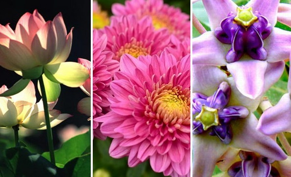 meaning of flowers for worshiping cover