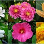 แนะนำ 15 ดอกไม้บูชาพระ พร้อมความหมายของดอกไม้แต่ละชนิด เสริมสิริมงคลให้กับชีวิต