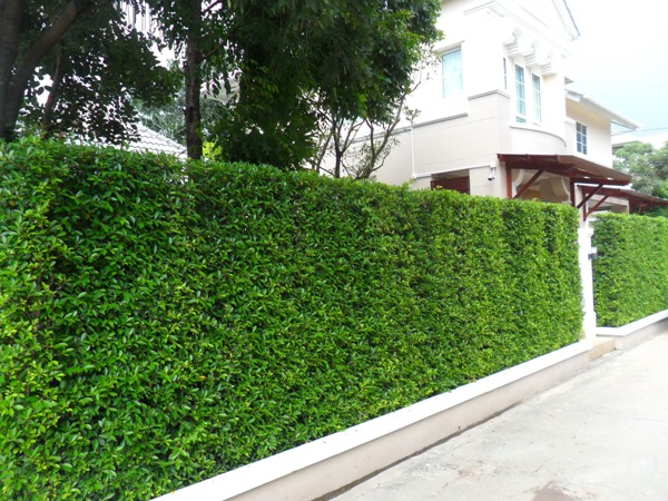 12-plant-walls (11)