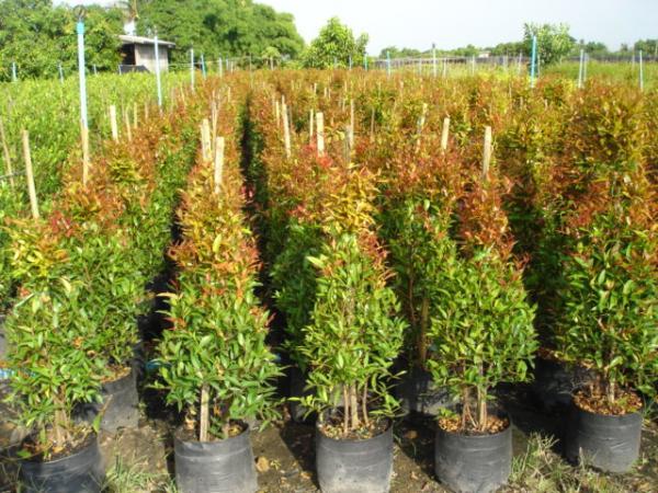 12-plant-walls (12)