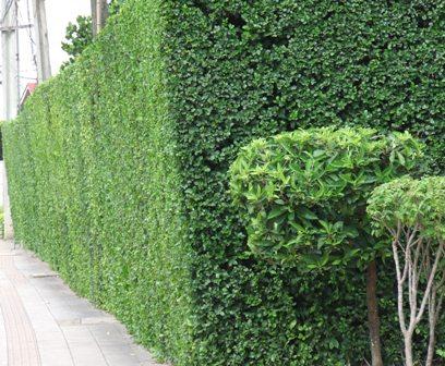 12-plant-walls (2)