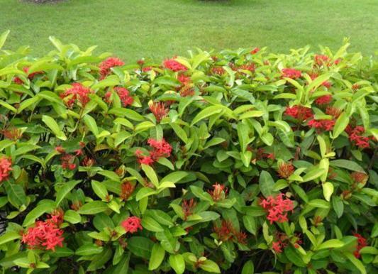 12-plant-walls (3)