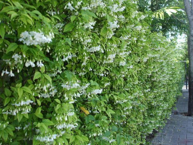 12-plant-walls (6)