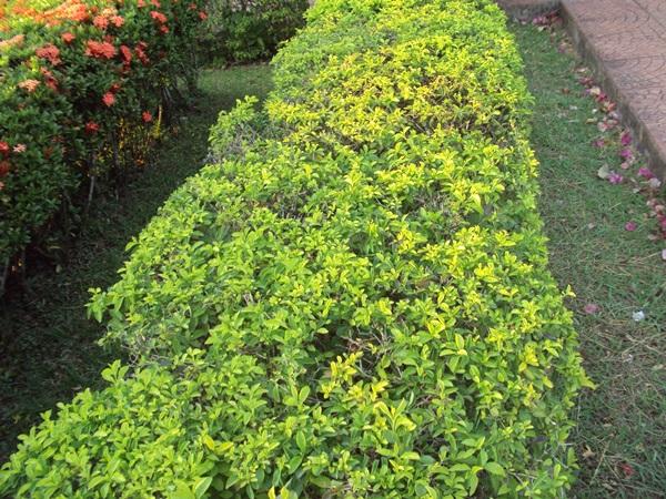 12-plant-walls (7)