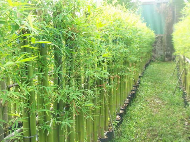 12-plant-walls (8)
