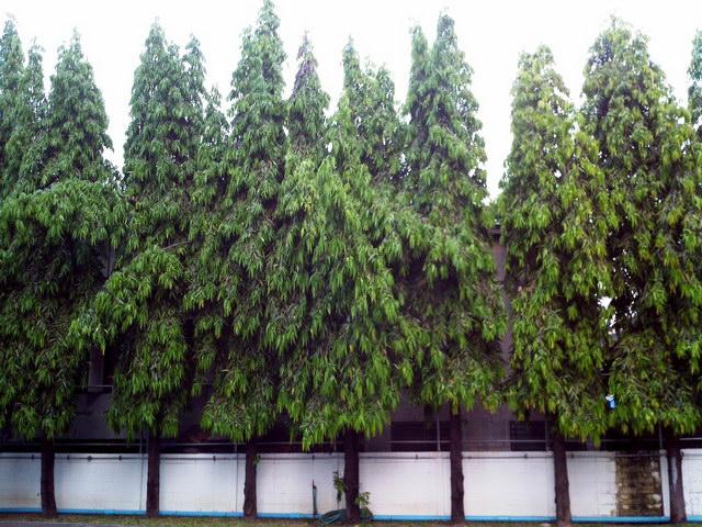 12-plant-walls (9)