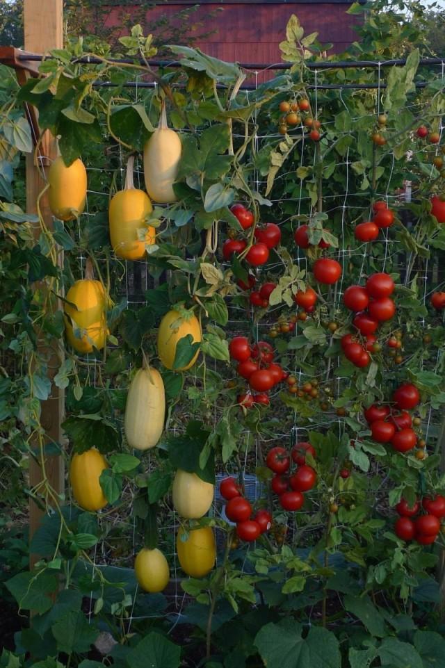 15 ideas for vertical garden (11)
