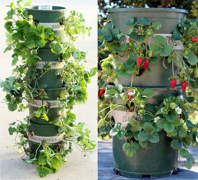 15 ideas for vertical garden (14)