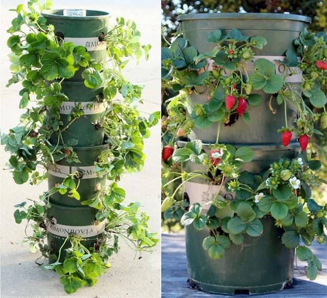 15 ideas for vertical garden (14)