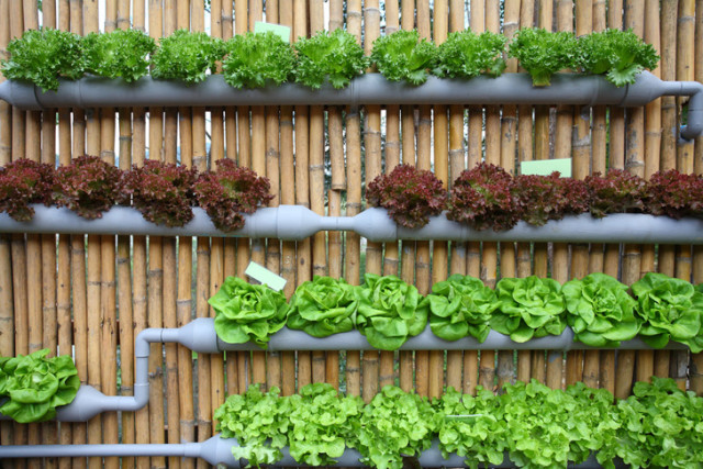 15 ideas for vertical garden (2)