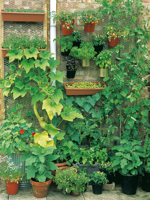 15 ideas for vertical garden (4)