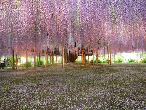 29 gorgeous-japanese-garden-ideas (26)