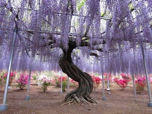 29 gorgeous-japanese-garden-ideas (29)