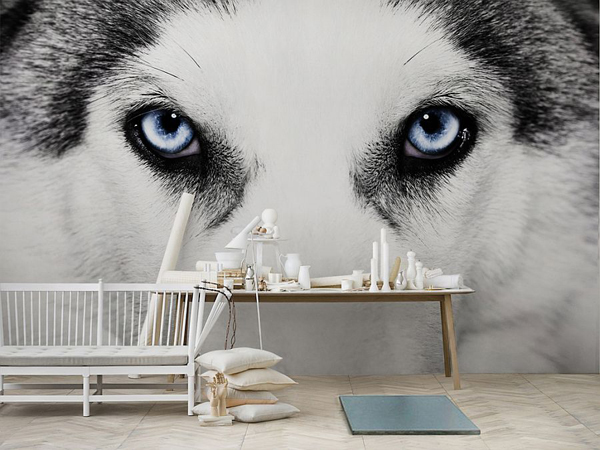 blue-eyes-wolf-wallpaper-ideas