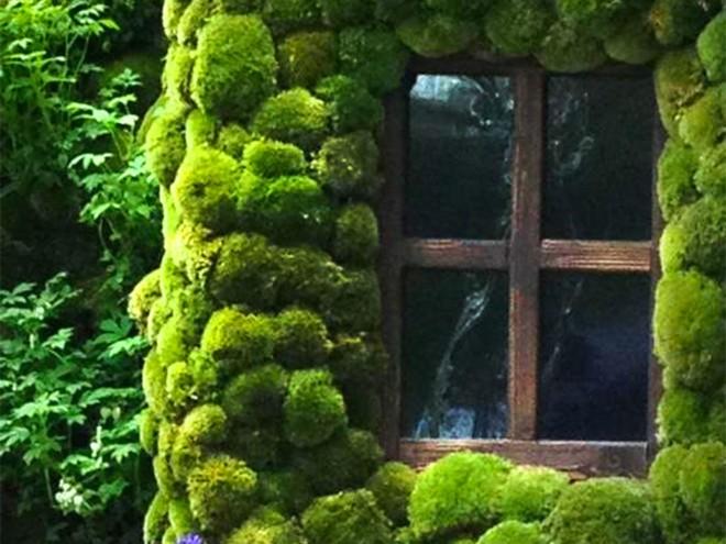 moss wall idea (6)