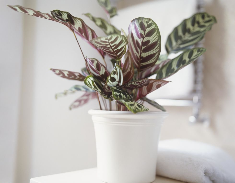 10-low-light-needed-houseplants (1)