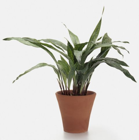 10-low-light-needed-houseplants (10)