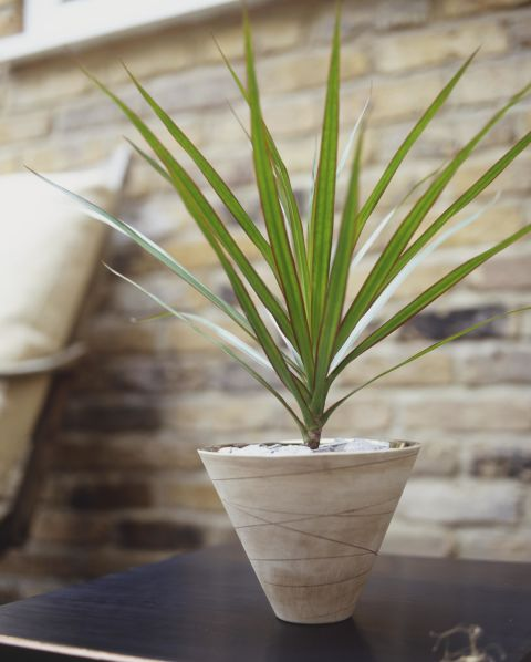 10-low-light-needed-houseplants (3)