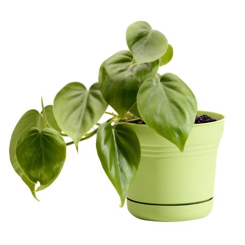 10-low-light-needed-houseplants (5)