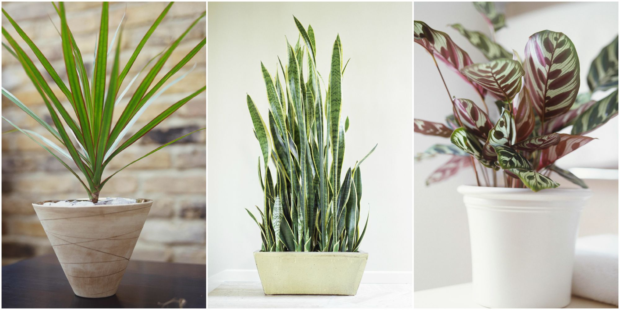 10-low-light-needed-houseplants cover