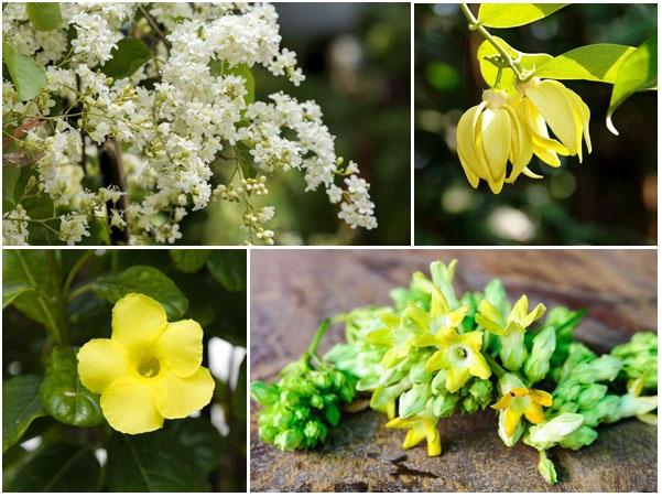 10 pergola plants cover