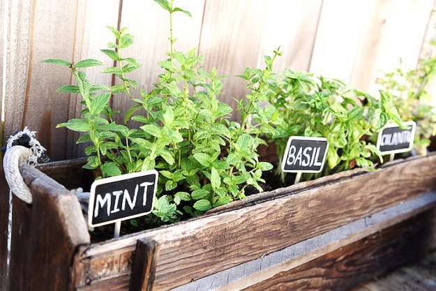 15-diy-signs-markers-garden (5)