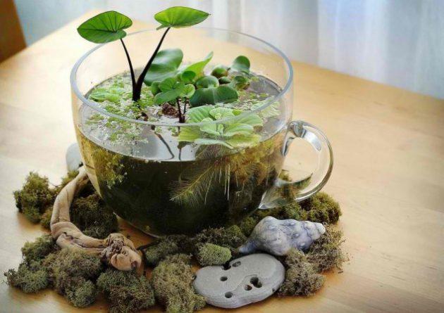 15 idea miniature garden (6)