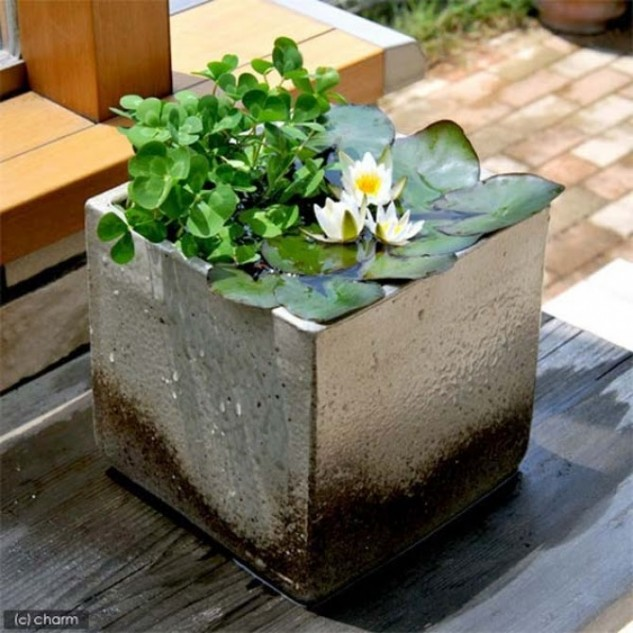 16 Mini Water Garden Inspirations (10)