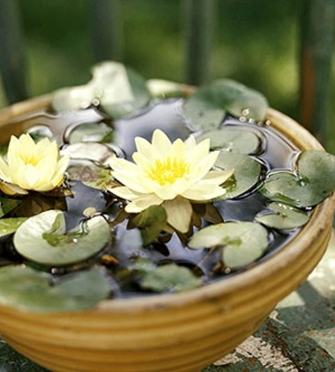 16 Mini Water Garden Inspirations (11)