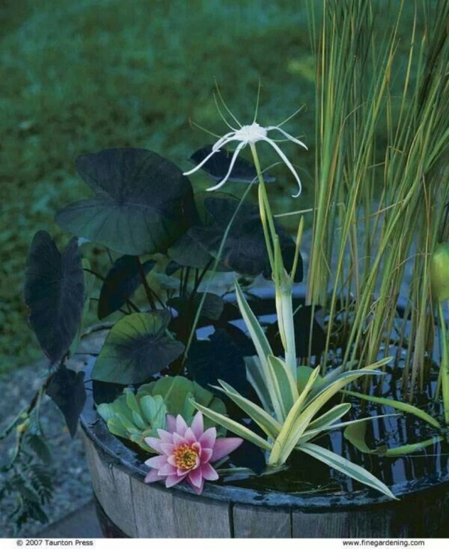 16 Mini Water Garden Inspirations (12)