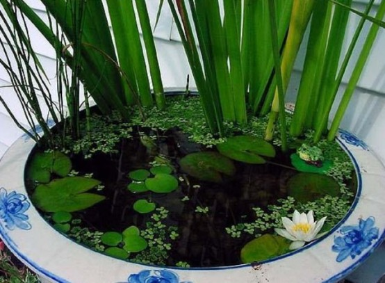 16 Mini Water Garden Inspirations (13)
