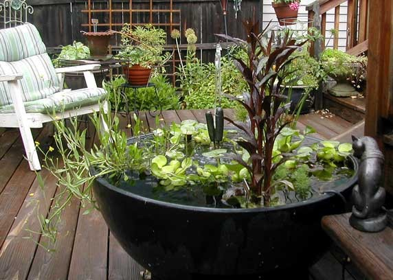 16 Mini Water Garden Inspirations (15)