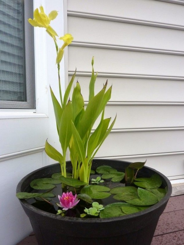 16 Mini Water Garden Inspirations (9)