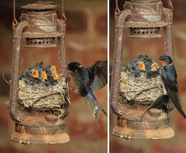 19-diy-birdhouse-designs (6)