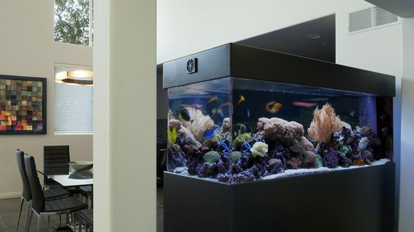 20-modern-aquariums-for-cool-interior (11)