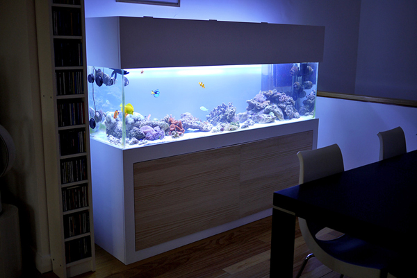20-modern-aquariums-for-cool-interior (17)
