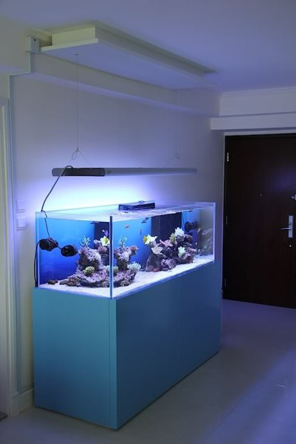 20-modern-aquariums-for-cool-interior (18)