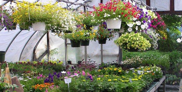 21 diy hanging garden ideas (8)