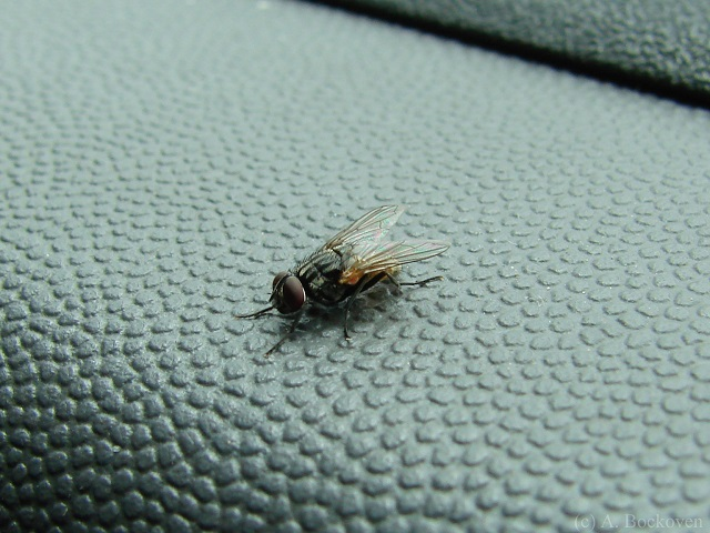 5-ways-to-get rid of house flies