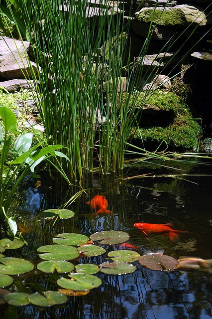 53 backyard pond ideas (18)