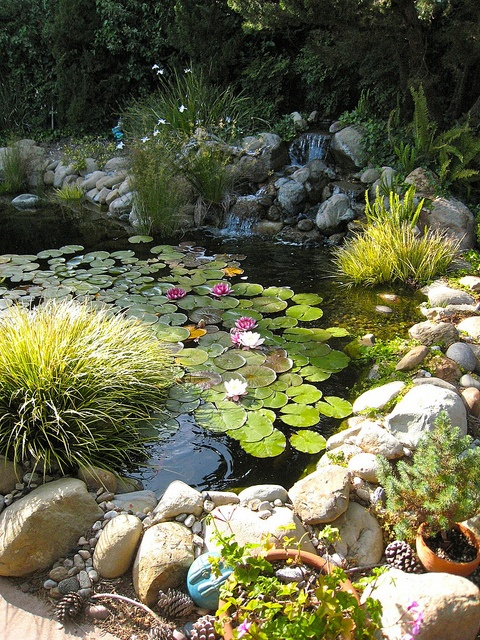 53 backyard pond ideas (21)