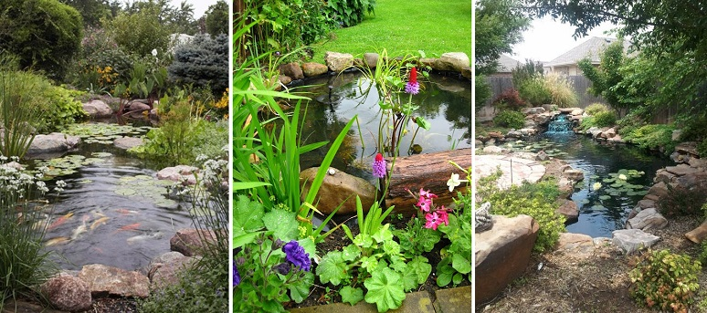 53 backyard pond ideas cover