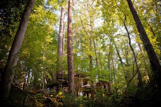 Bohemian House nature nestling (5)