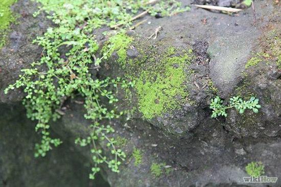 moss wall diy (2)