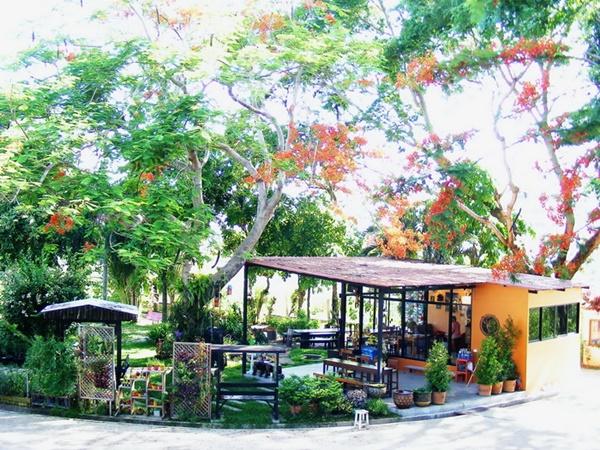 mushroom hut cafe review (1)