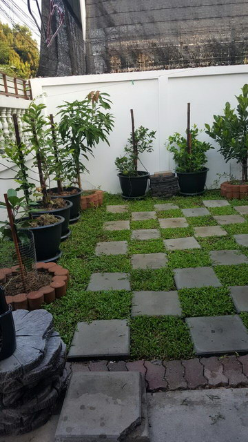 small sideyard garden review (8)